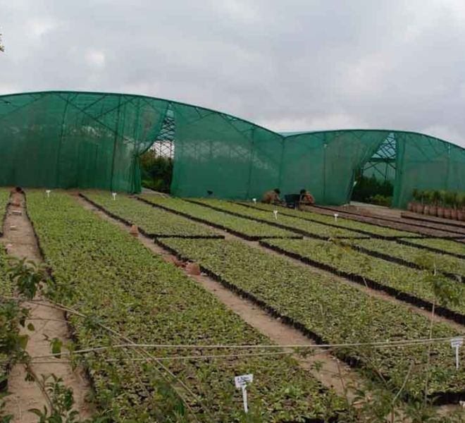 Capital Smart City Nursery